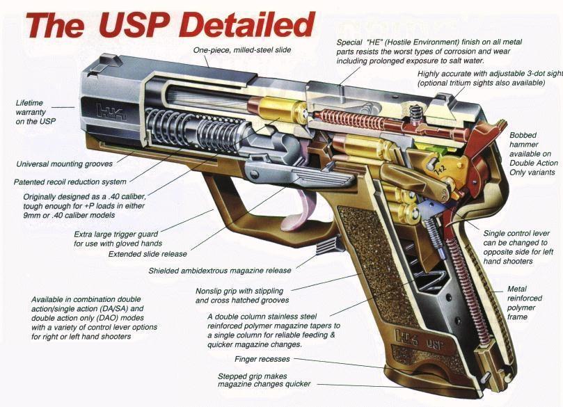 USP Anatomy